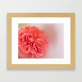 A Touch of Love - Pink Rose #2 #art #society6 Framed Art Print