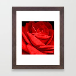 Red, Red Rose Framed Art Print