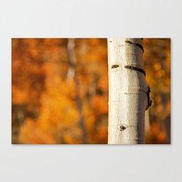 Quaking Aspen - Fall Canvas Print