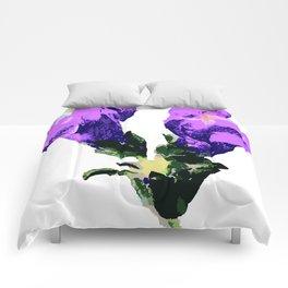 Antirrhinum Comforters