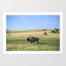 Badland Bison Art Print