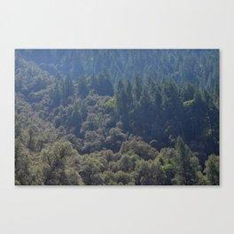 yuba trees Canvas Print