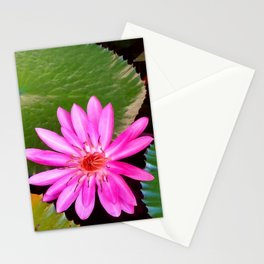 Pink Waterlily Flower Photo 6 Stationery Cards