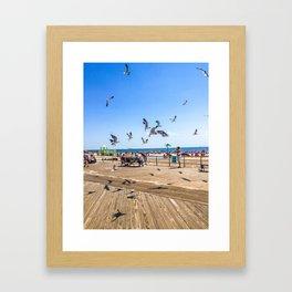 Seagulls of Coney Island Framed Art Print