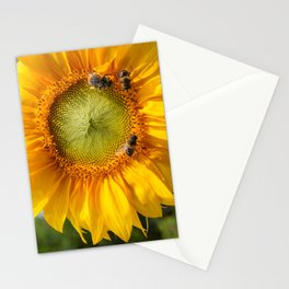 Sunflower and bees Stationery Cards