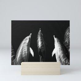 Black and white dolphins Mini Art Print