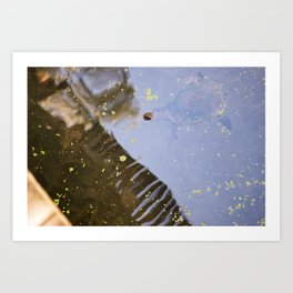 Turtle Pond Art Print