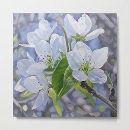 Pear Blossoms Metal Print