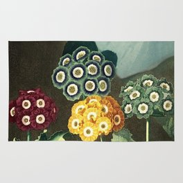 Group of Auriculas :  Temple of Flora Rug