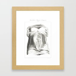 Human Anatomy Art Print MUSCLE ABDOMINALS OBLIQUE Vintage Anatomy, doctor medical art, Antique Book Framed Art Print