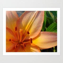 Orange Lily Closeup Art Print