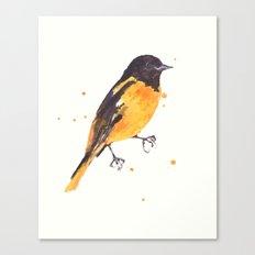Baltimore Oriole, Bird paintings, black and orange, american birds, ornithologist pillow Canvas Print