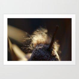 bullrush at dawn Art Print