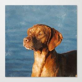 Vizsla dog - Hungarian hound Canvas Print
