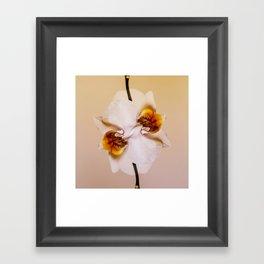 Tenderness Framed Art Print