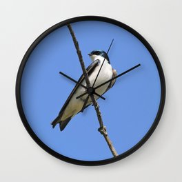 Handsome Male Tree Swallow on a Branch Wall Clock