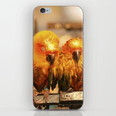 couple parrot photography iPhone & iPod Skin