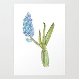 Hyacinth Field Art Print