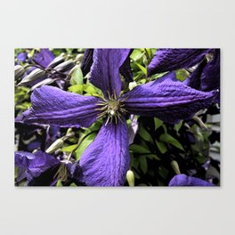 Dark Purple Canvas Print