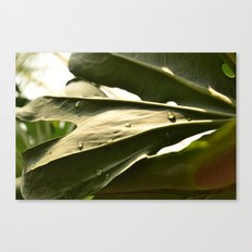 Sun Lit Green Life Canvas Print