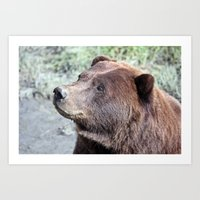 bear stare  Art Print