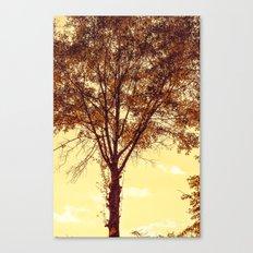 Sunny Tree Canvas Print