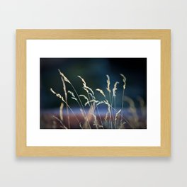 waiting in the weeds Framed Art Print