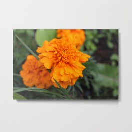 Orange Drops Metal Print