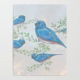 """"""" Bluebirds """" Poster"""