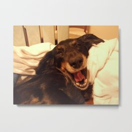 Laughing Doxie Metal Print