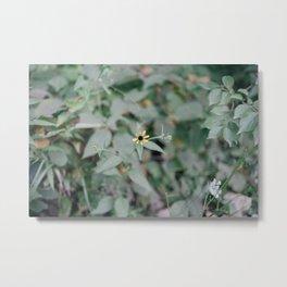 August Wildflowers XII Metal Print