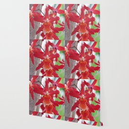 Exquisite Epidendrum Orchids Wallpaper