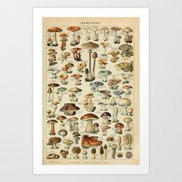 Adolphe Millot - Nouveau Larousse Illustré - Champignons (Mushrooms and Fungi) (1910) Art Print