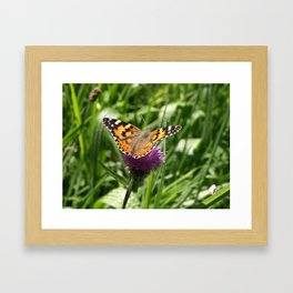 PAINTED LADY BUTTERFLY Vanessa Cardui Framed Art Print