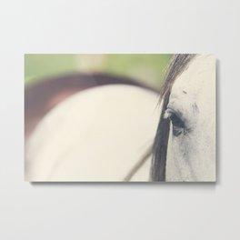 Grey Horse Metal Print