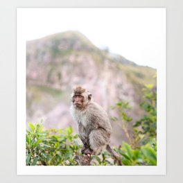 Wild Monkey on Mount Batur Volcano Art Print