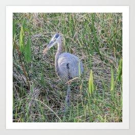 Hello Blue Heron Art Print