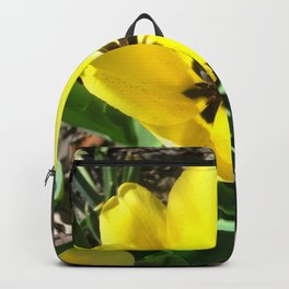Yellow Crocus Flowers Backpack