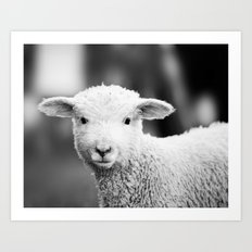 Lamb in Black and White Art Print