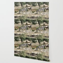 Lonely Zebra Wallpaper