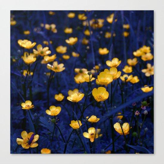a sea of buttercups Canvas Print