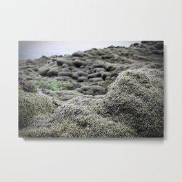 moss 1 Metal Print