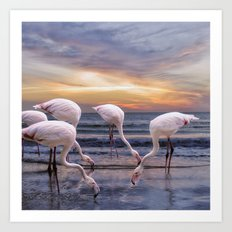 Flamingos feeding Art Print