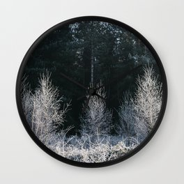 Young trees covered in a thick white frost. Norfolk, UK. Wall Clock