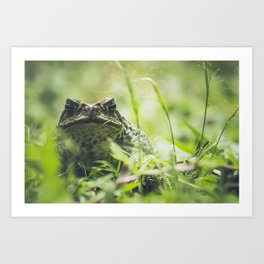 Animal Photography - Big Toad Art Print