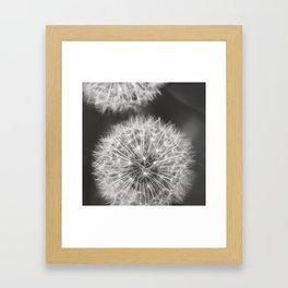 Dandelion Wishes Gerahmter Kunstdruck
