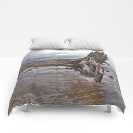 Drift Wood Beach 7 Comforters