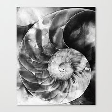 Black And White Nautilus Shell By Sharon Cummings Canvas Print