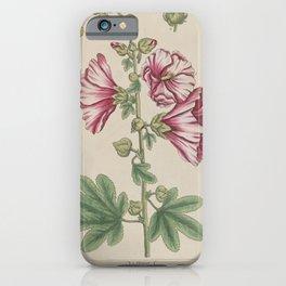 Flower Holly hocks malva arborea iPhone Case