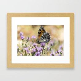 Hipparchia cretica Butterfly Framed Art Print